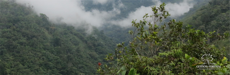 Banner Gestion Forestal 1706