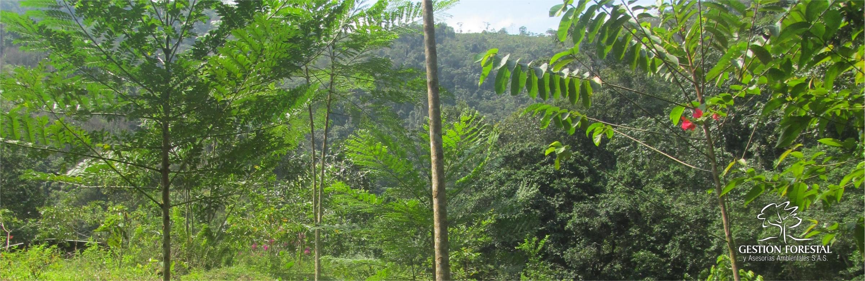 Banner Verde Gestion Forestal 1703