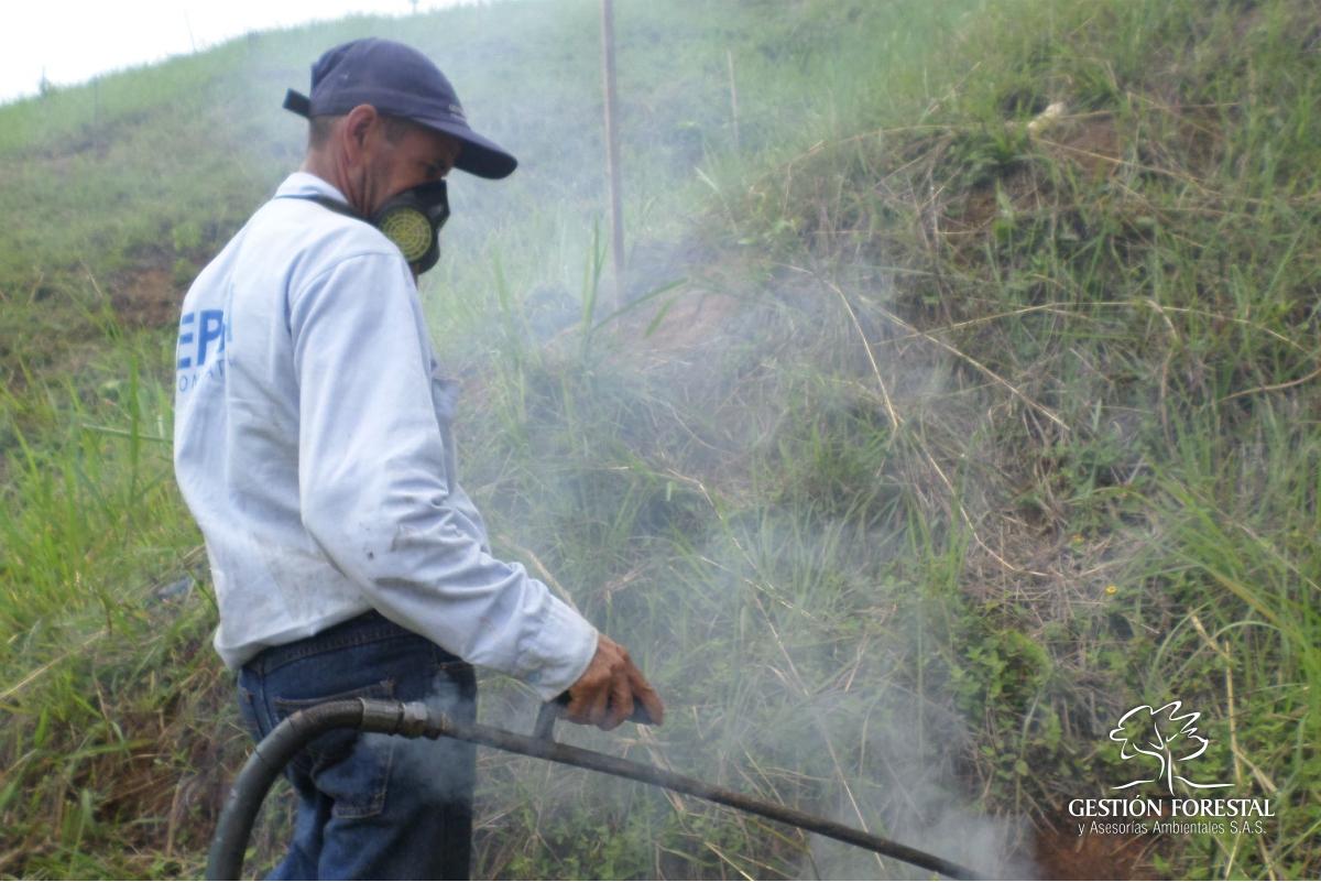 Control Hormiga Gestion Forestal 1702