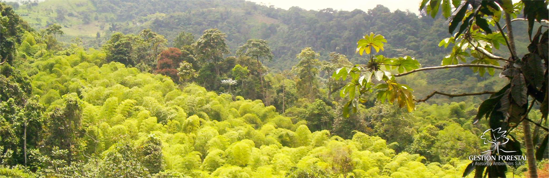 Nosotros Gestion Forestal 1703