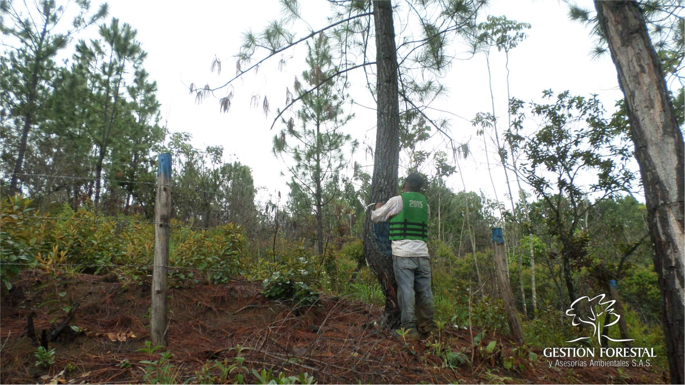 Proyectos 3 Gestion Forestal 1703